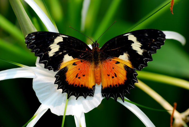Download Butterfly Stock Image - Image: 1369271