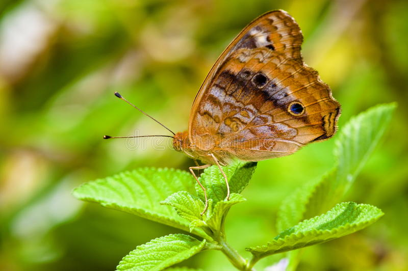 Download Butterfly stock image. Image of animal, wing, leaf, detail - 14249183
