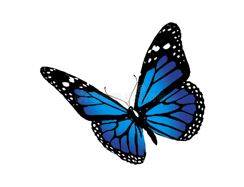 Butterfly royalty free illustration