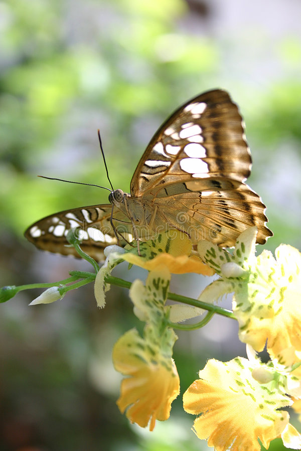 Download Butterfly stock image. Image of flight, insect, feeler - 144315