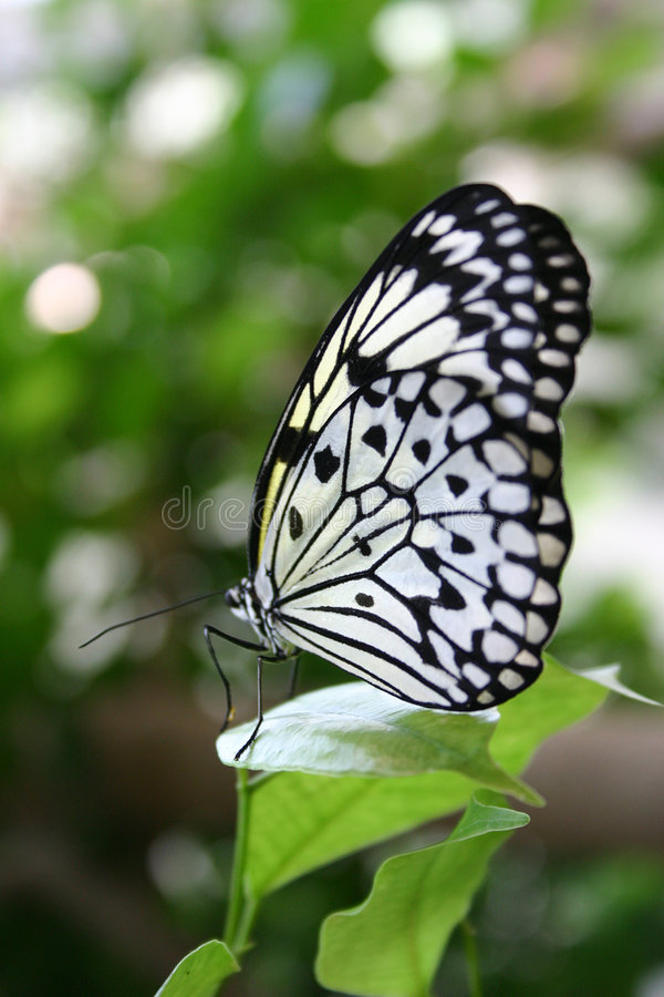 Download Butterfly stock image. Image of insects, white, animal - 144319