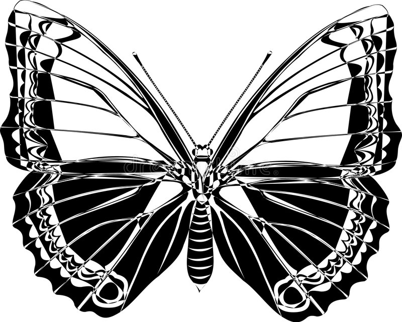 Download Butterfly Stock Photography - Image: 1448792
