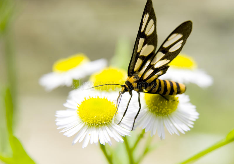 Download Butterfly stock photo. Image of monarch, color, fragility - 14766096