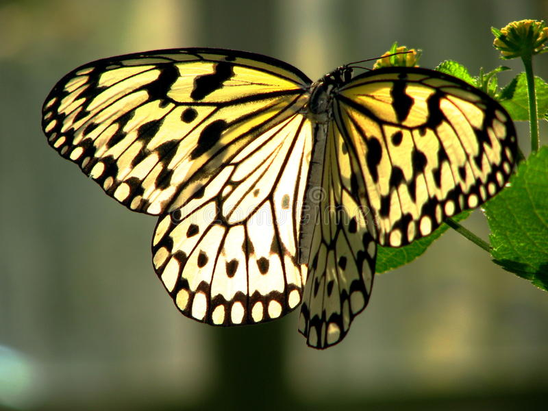 Download Butterfly stock image. Image of wings, beauty, details - 14888453