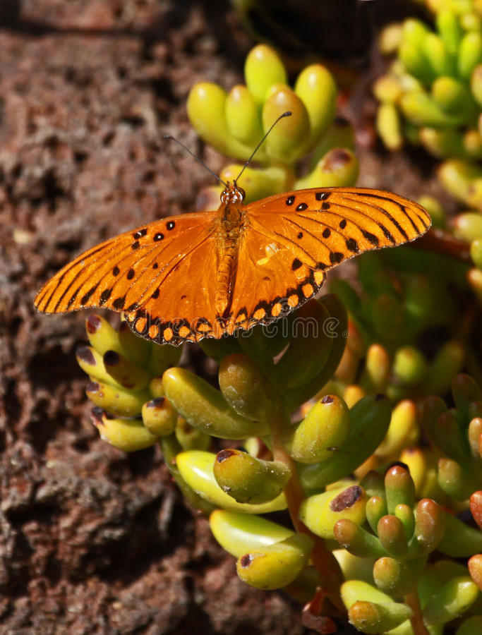 Free Butterfly Stock Image - 16409271