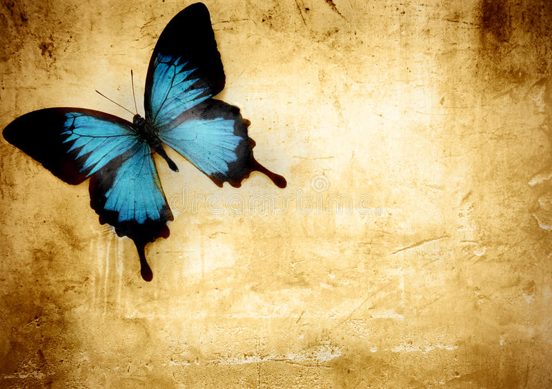 Butterfly. Beautiful black and blue butterfly