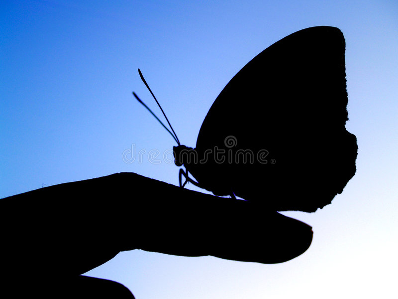 Download Butterfly 2 Royalty Free Stock Photos - Image: 1400048