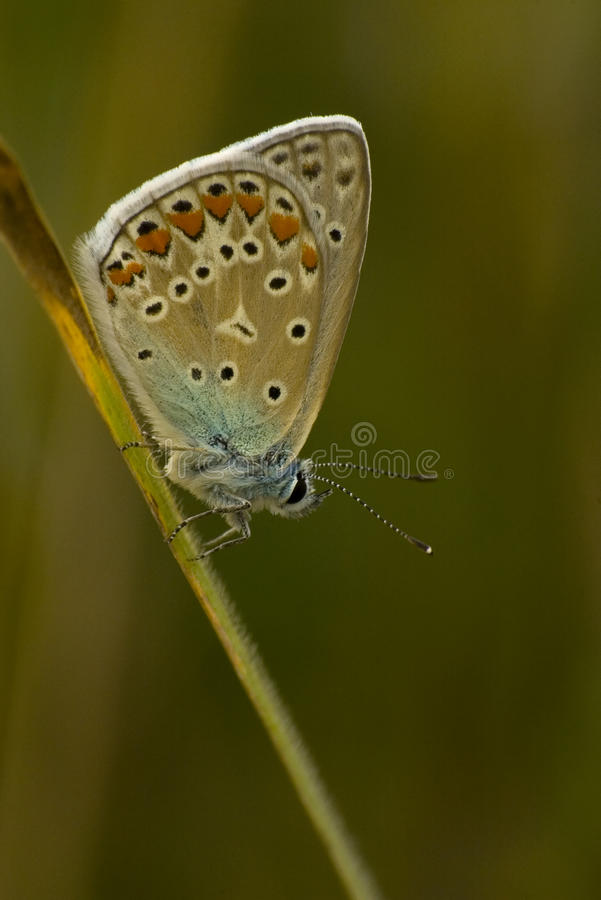 Download Butterfly Stock Image - Image: 20552671