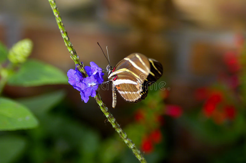 Download Butterfly stock photo. Image of nature, macro, butterfly - 20778