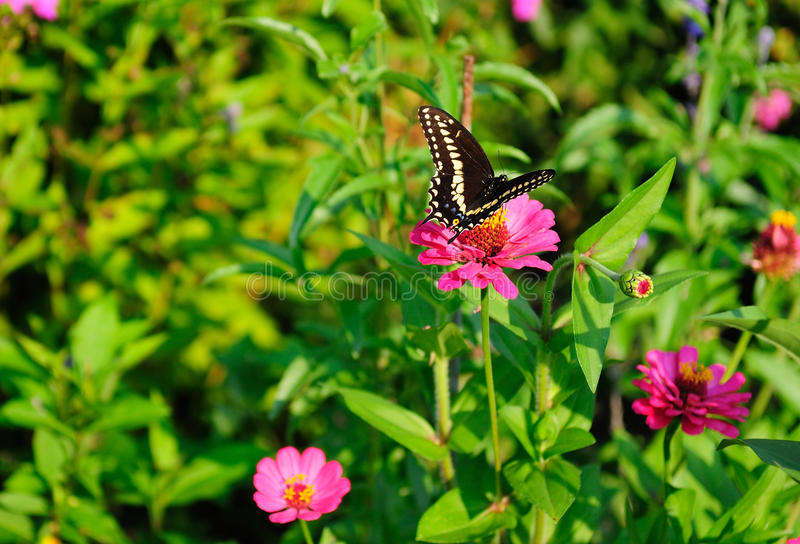 Download Butterfly stock photo. Image of colorful, summer, vivid - 20824264