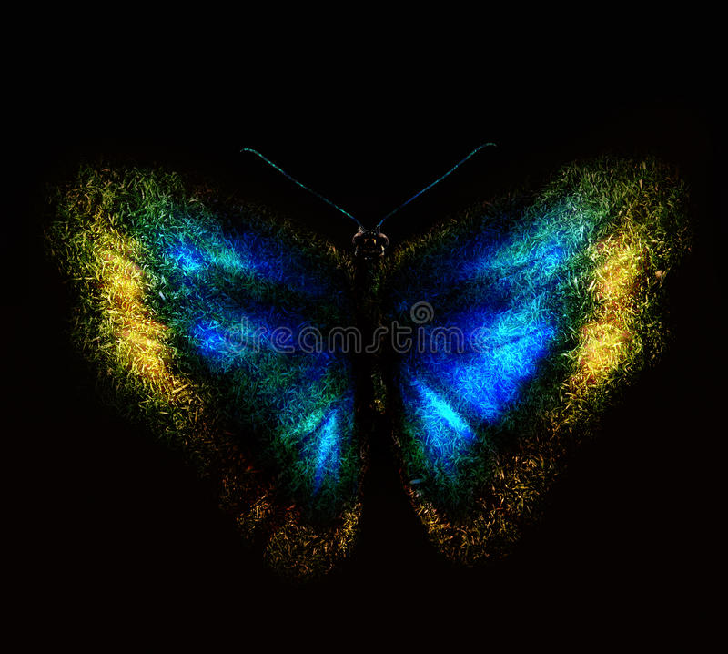 Free Butterfly Stock Photography - 21808172