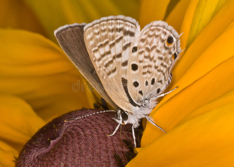 Butterfly. Mainly day-flying insect of the order Lepidoptera, which includes the butterflies and moths. The butterfly's life cycle consists of four stages: egg royalty free stock photos