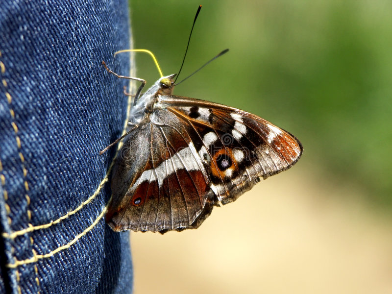 Download Butterfly stock photo. Image of attraction, animals, macro - 225786