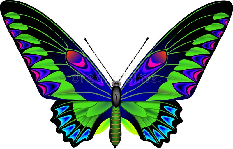 Download Butterfly stock vector. Illustration of papilionidae, nature - 226535