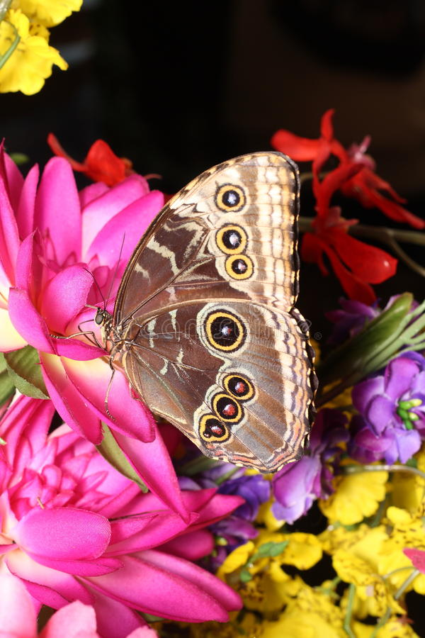 Free Butterfly Stock Photography - 22865002