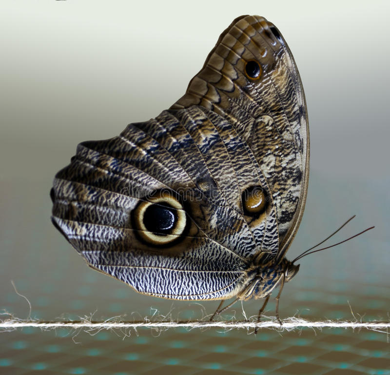 Download Butterfly stock photo. Image of insect, line, protection - 24445388