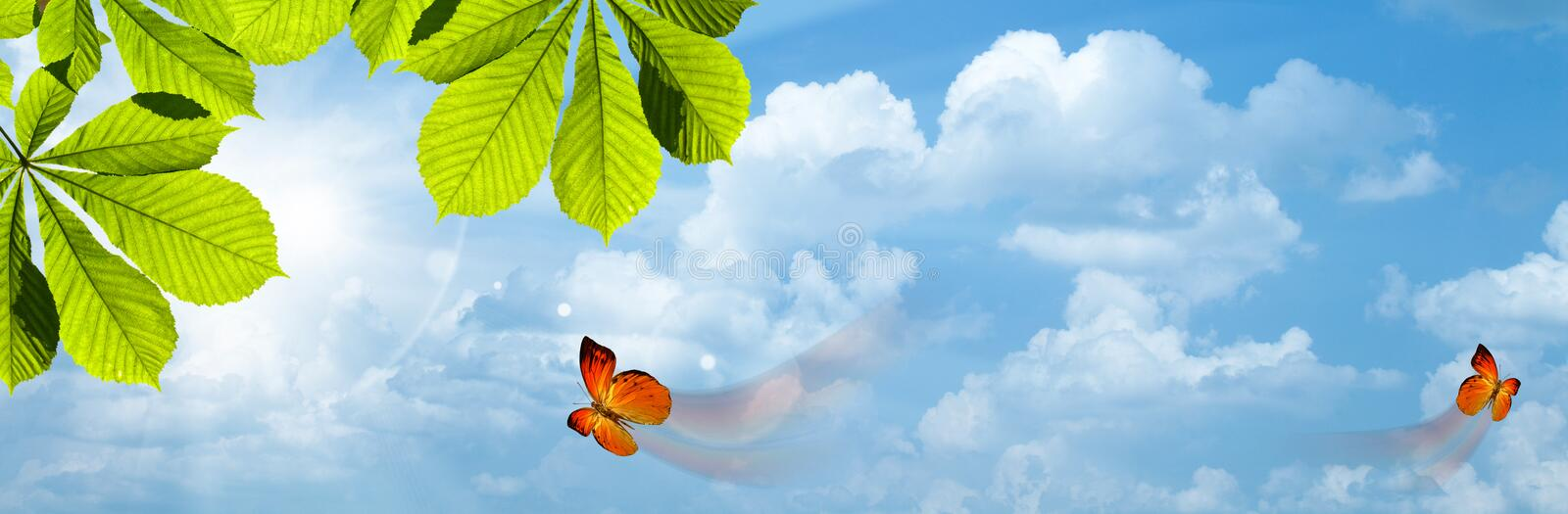 Download Butterfly. stock photo. Image of front, atmosphere, nature - 24744080