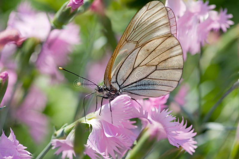 Download Butterfly stock image. Image of pollinate, purple, blooms - 25286483
