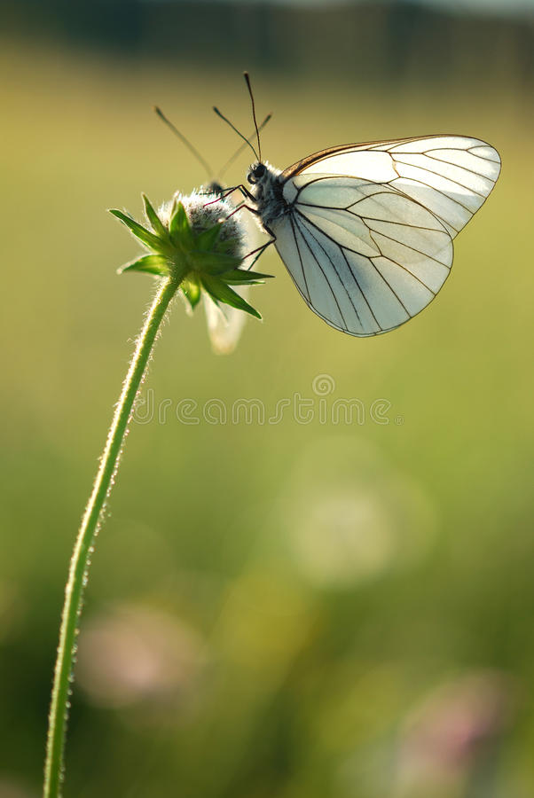 Download Butterfly stock photo. Image of garden, spring, macro - 25297818