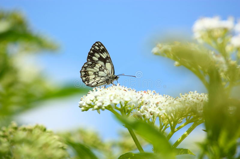 Download Butterfly stock photo. Image of white, color, butterfly - 25662676