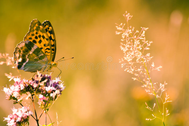 Download Butterfly stock photo. Image of summer, antenna, beautiful - 25663308