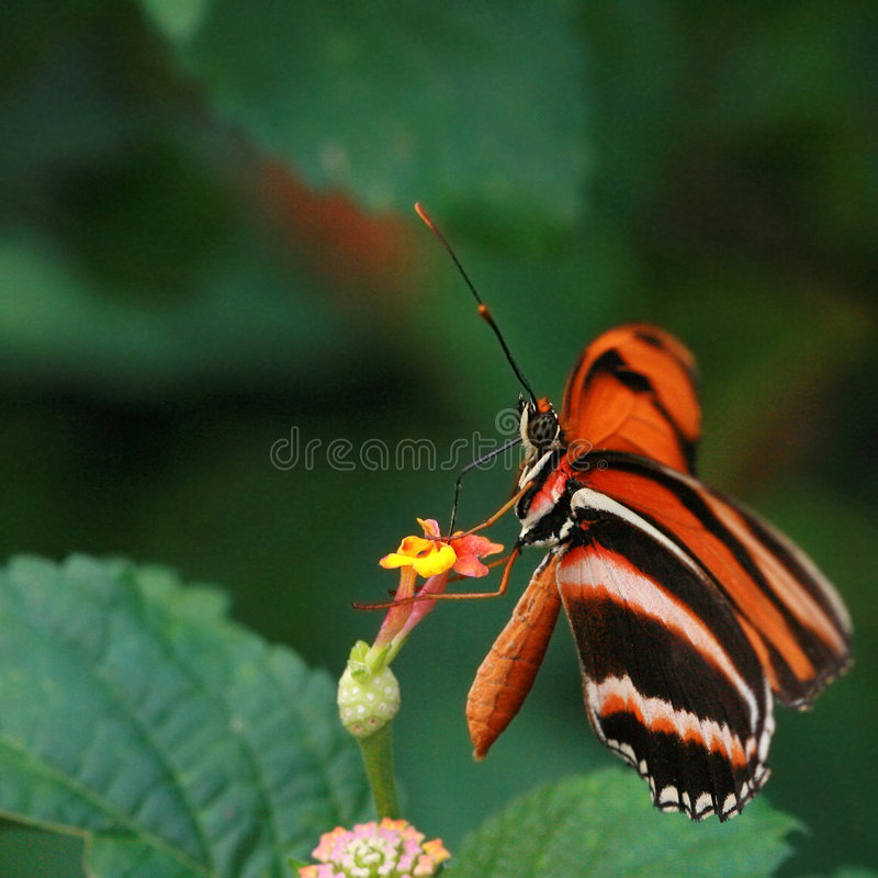 Free Butterfly Royalty Free Stock Photography - 2588937