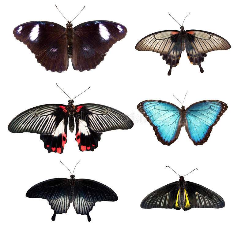 Butterfly. Collection, isolated on white background