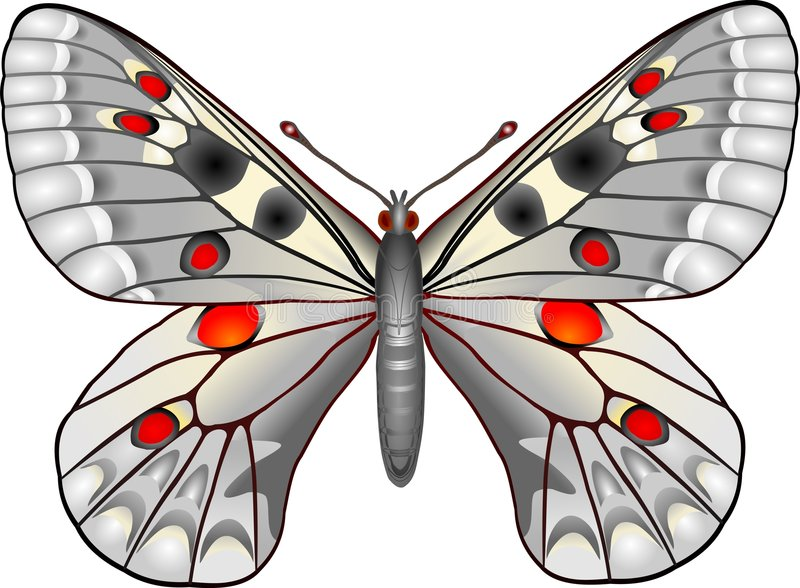 Download Butterfly stock vector. Image of arthropods, insect, nature - 260160