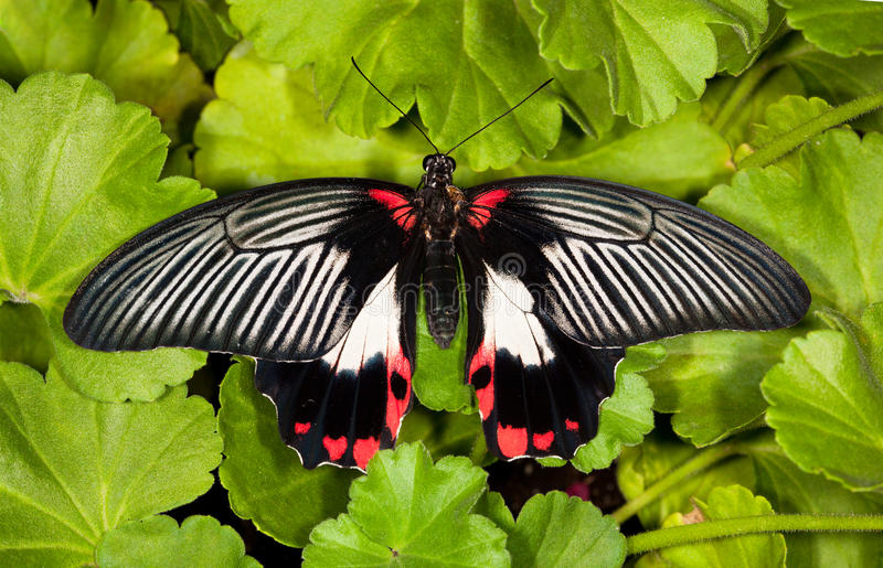 Download Butterfly stock image. Image of background, detail, colorful - 26081855