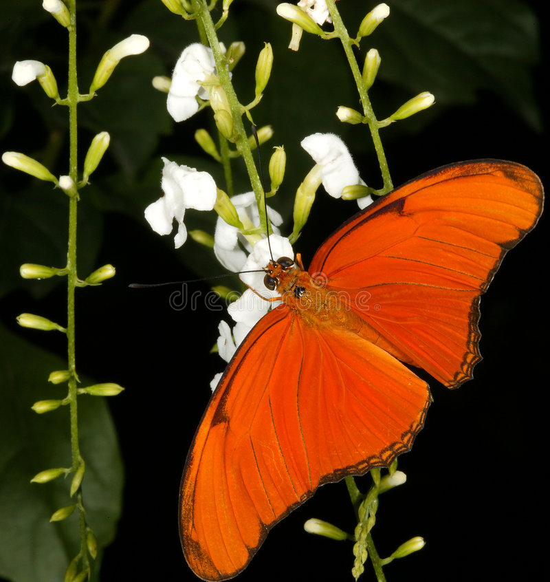 Free Butterfly Royalty Free Stock Photos - 261558