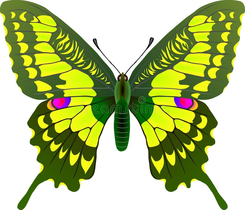 Download Butterfly stock vector. Illustration of arthropods, biodiversity - 266720