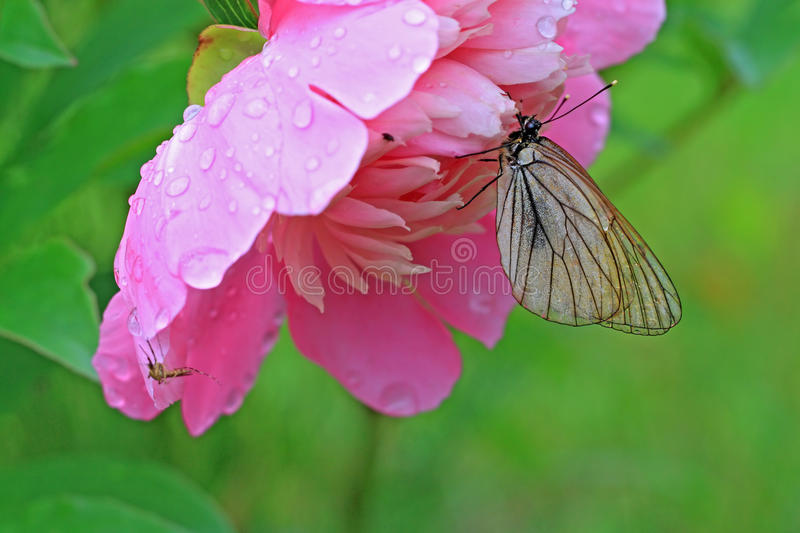 Download Butterfly stock image. Image of color, colored, antenna - 26794899