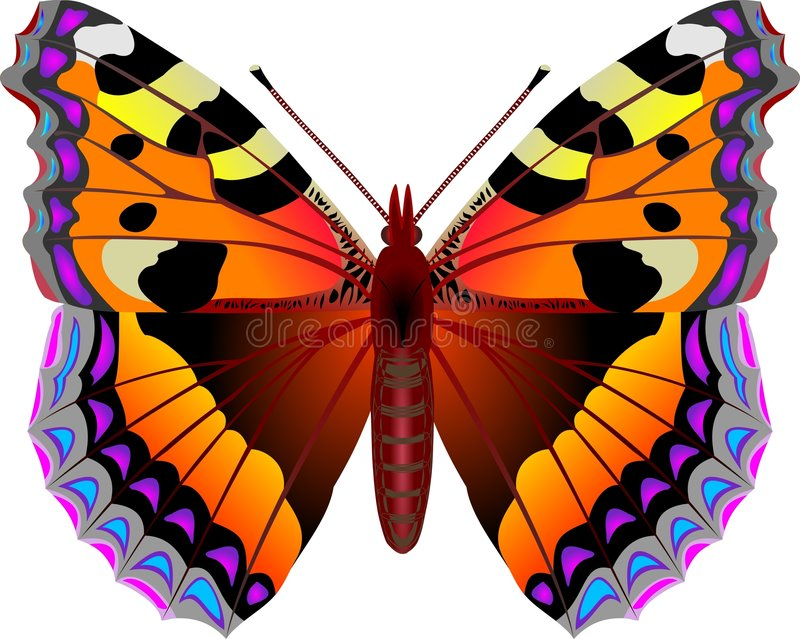 Butterfly. Aglais urticae butterfly vector illustration