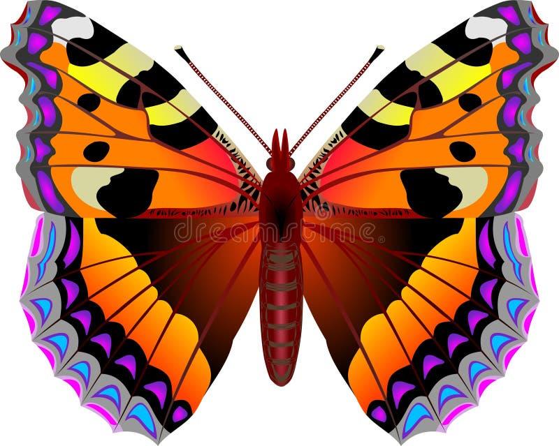 Butterfly. Aglais urticae butterfly