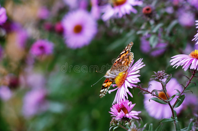 Download Butterfly stock image. Image of flower, light, color - 27035545