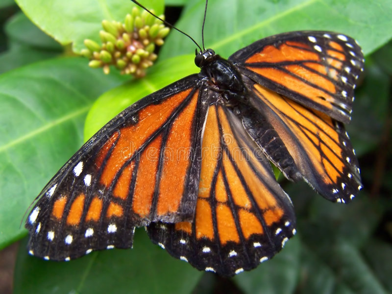 Download Butterfly stock image. Image of orange, pretty, gentle - 283425