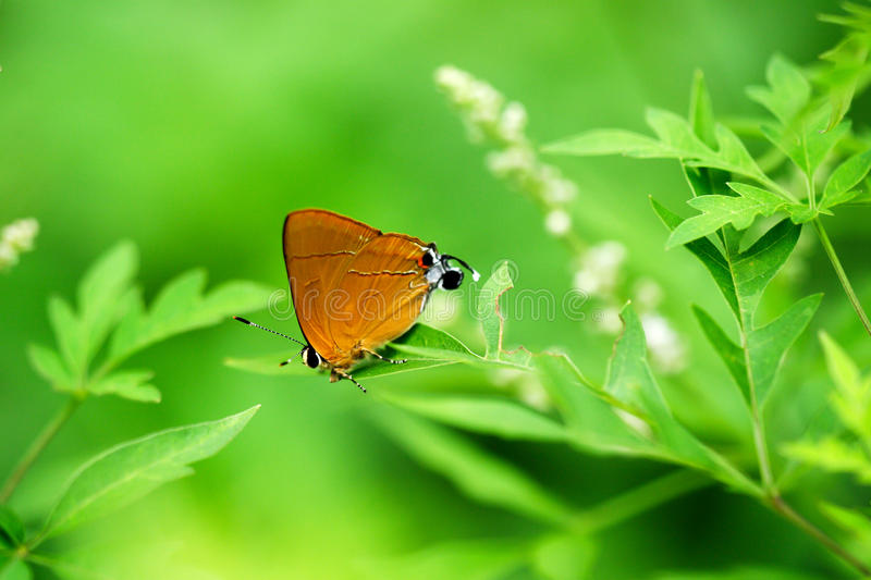 Download Butterfly stock image. Image of macro, garden, attractive - 29503569