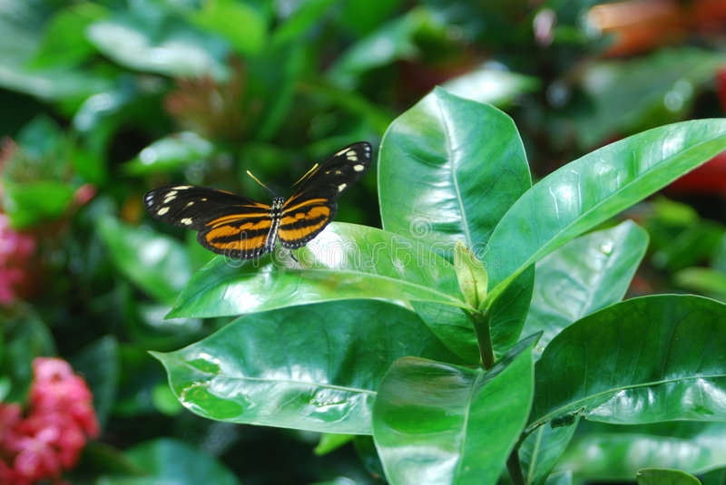 Download Butterfly Stock Image - Image: 3157161