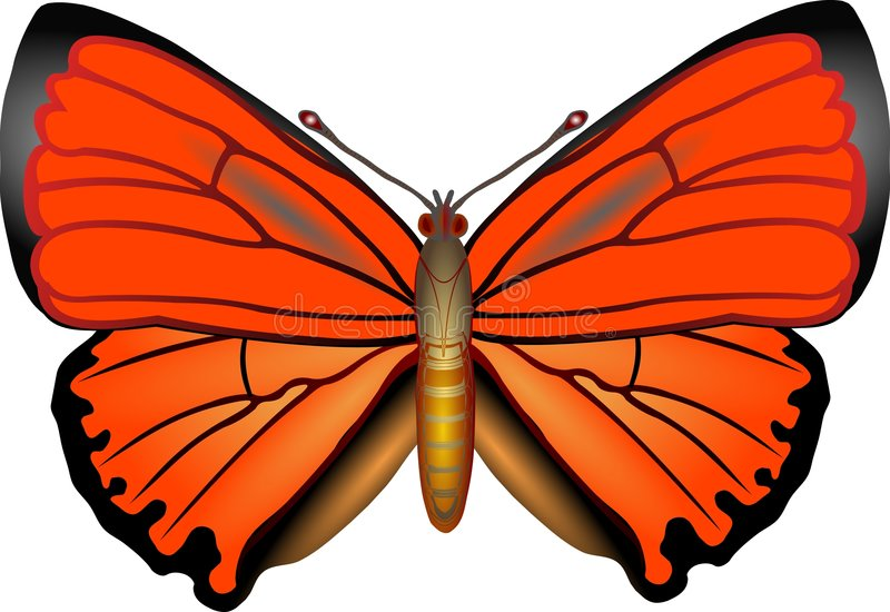 Download Butterfly Stock Image - Image: 340741