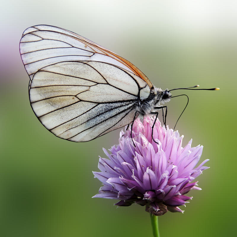 Free Butterfly Stock Images - 34422394