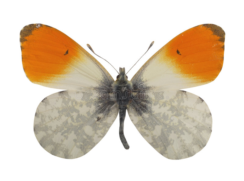 Butterfly. Hand made clipping path included