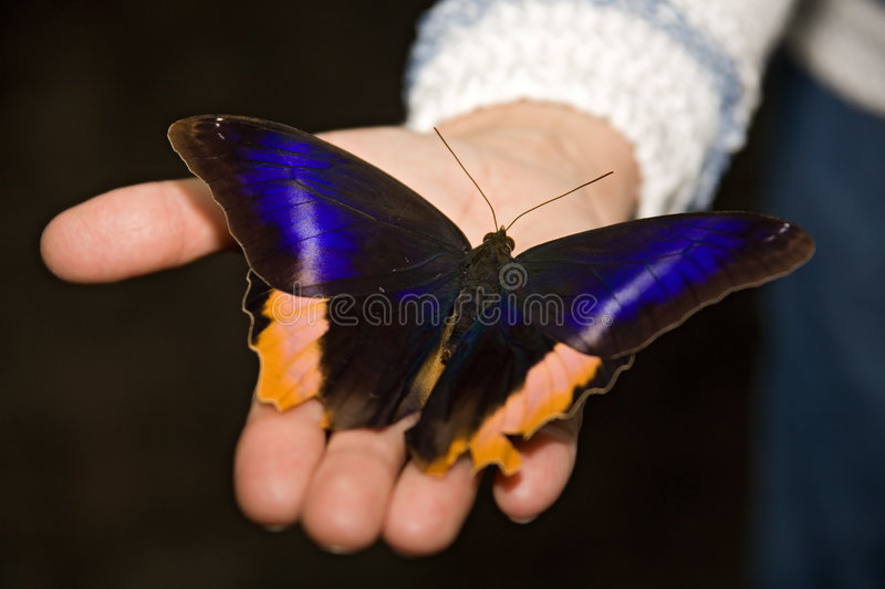 Download Butterfly stock image. Image of life, shade, twig, graceful - 397949