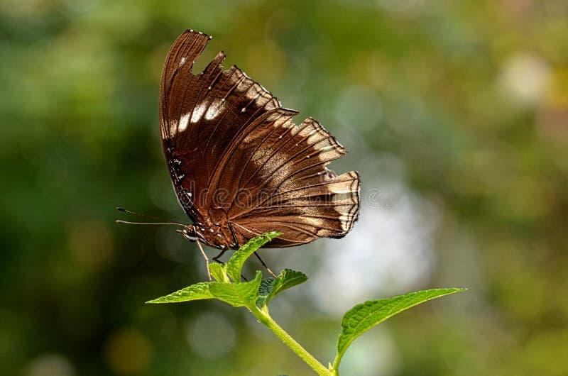 Butterfly12 stock fotografie