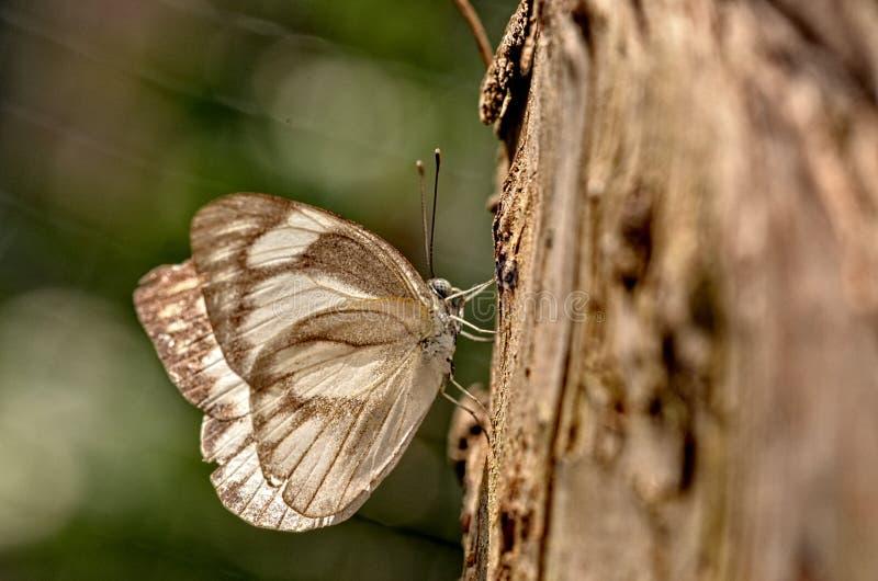 Butterfly8 royalty-vrije stock foto