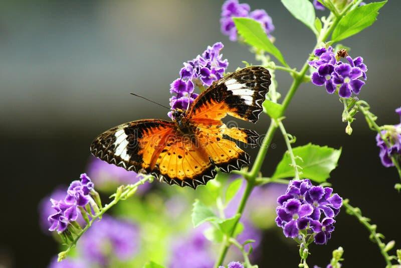 Butterfly02 foto de stock royalty free