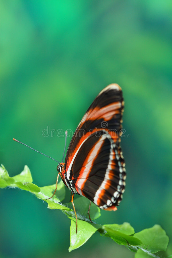 Free Butterfly Stock Photos - 4763193