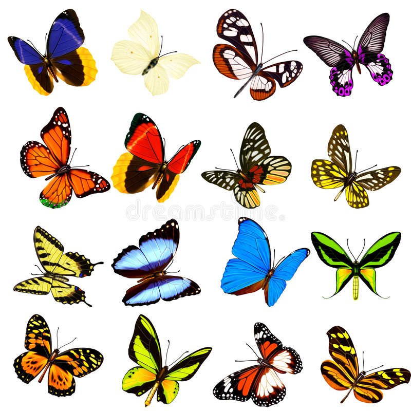 Butterfly. Digital illustration. gradient mesh. filters vector illustration