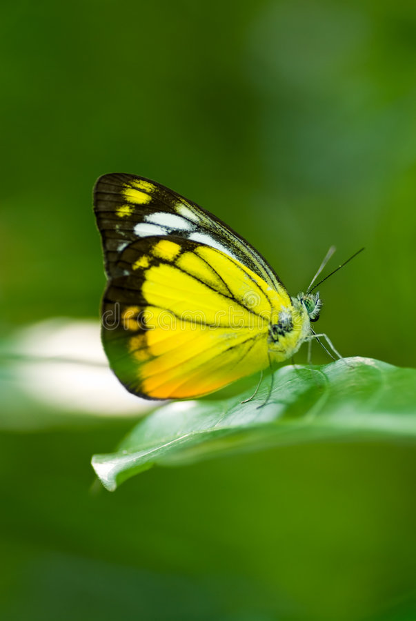 Butterfly. Macro shot of butterfly on green leaf stock photography
