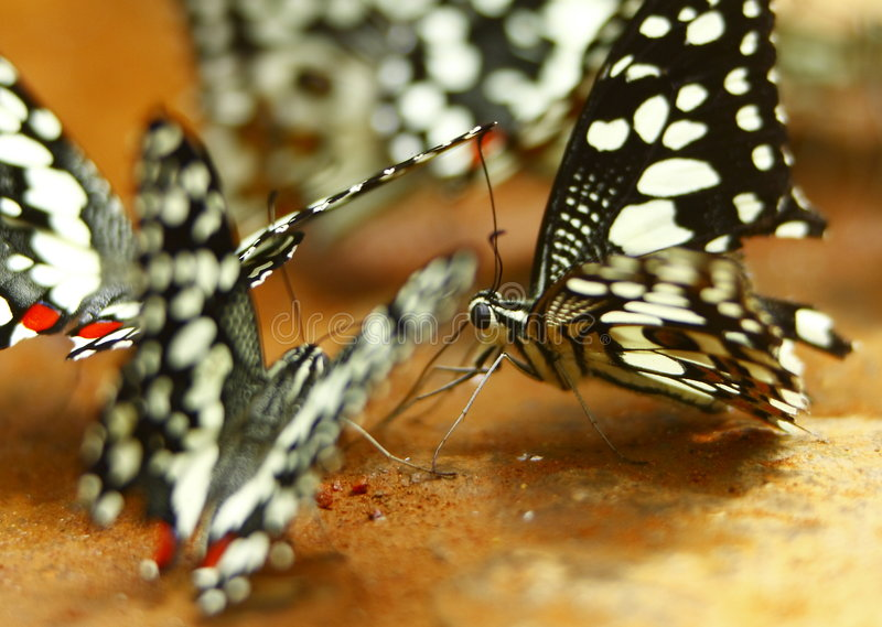 Download Butterfly Stock Photos - Image: 5808603