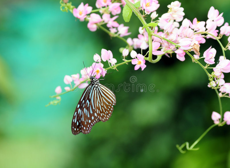 Download Butterfly stock image. Image of summer, peacock, color - 7129551